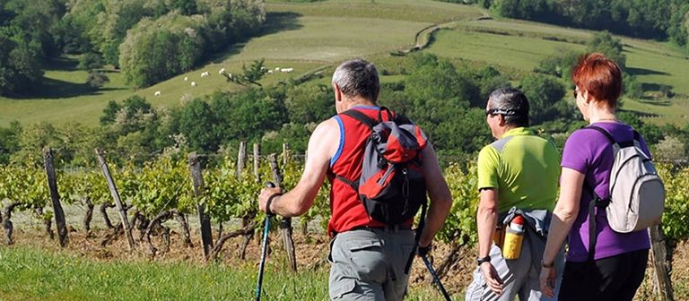 Vineyard discovery tours with La Caborde